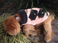 Collection capsule - Vétements luxe chaud pour chiens et chats - Cashemire, Laine & Soie -