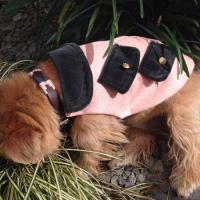 Manteaux chauds luxe pour chiens et chats